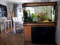 Bullet shape fish tank