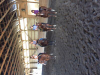 Western Riding & Horsemanship Lessons