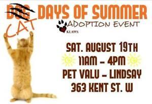 KLAWS Adoptathon August 19th 2017 at 11 AM til 4 PM in Lindsay!