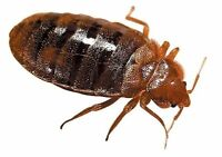 Cockroaches,Bed Bugs,Sow Bugs