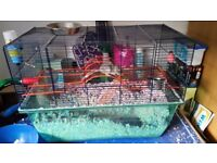2 Gerbils with Cage..food dish,bottle and sand washing bowl. Gerbil ball and toys