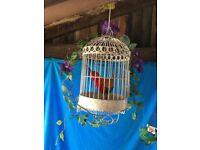 Decorative birdcage with bonus brightly coloured bird. Bird & birdcage for £15 only.