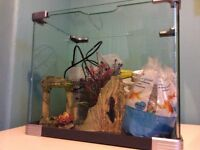 50litre fish tank, with filter, heater, ornaments,gravel and water treatment.