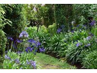 Adventurous lady gardener seeks unruly garden