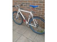 Raleigh adult single speed fixie