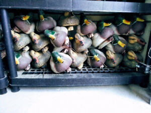 Duck Decoys, Mallard Hunting NOW ONLY $4 each!!!
