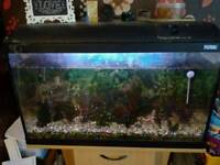 Fish tank, complete set up