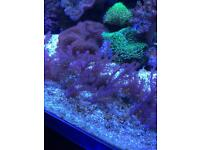 Corals from £3