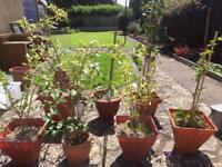 Various plants in pots