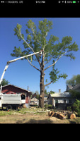 Calgary stump removal, cutting trees, trimming trees.