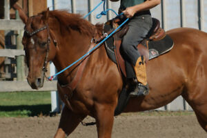 Beautiful kind, well trainer QH mare