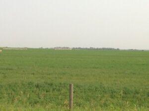 Hay/crop land