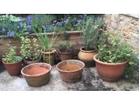 Terracotta Pots (8, various sizes and shapes)