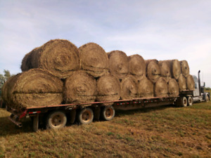 Hay for sale,certified organic