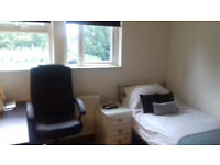double modern clean room to rent