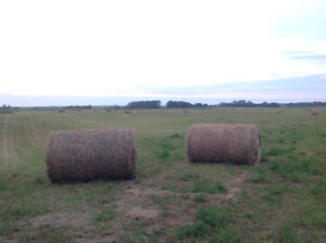 Large round and square hay bales for sale
