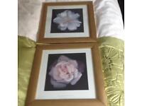 Framed flower prints