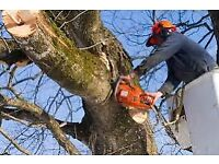 Tree Surgery and removal