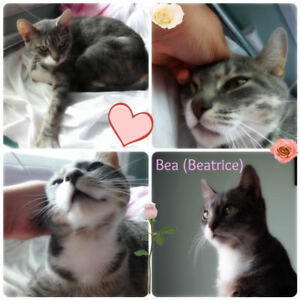 Beatrice. Momma Cat To Be, Needs Future Forever Home