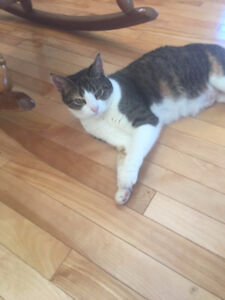 FREE Beautiful, Loving Cat in need of Good Home
