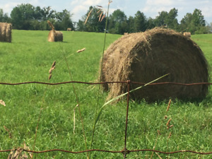 HAY ROUNDS FOR SALE - NORWOOD AREA