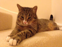 New Forever Home Required for Pancake the cat