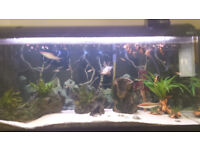 fishtank and contents for sale