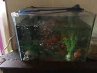 4x fishes with tank