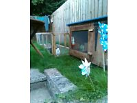 Rabbits and hutch for sale