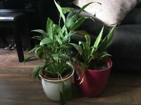 Beautiful indoor house plants for sale