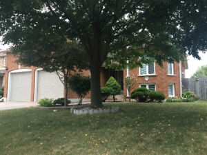 Beautiful raised ranch for Rent in South Windsor