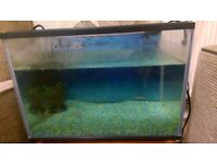 20L Fish Tank/Aquarium with 5 Fish