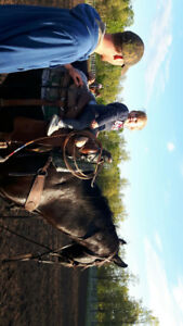 LOOKING FOR A KID FRIENDLY GELDING