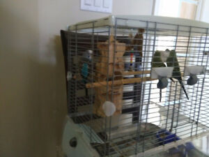Three Parakeets to a good home
