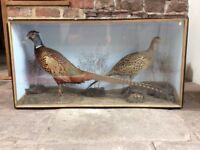 Victorian brace of taxidermy pheasants in origional case.