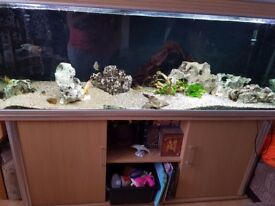 6'x2'x2' Aqua One Fish tank and oak wooden cabinet
