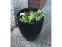 Pair of Black Ceramic Planters / Pots