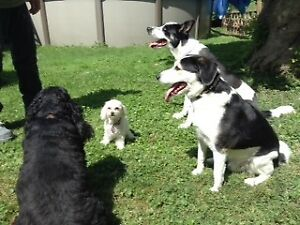 Petite pension pour animaux/Animal daycare  Delson (VIDEO)