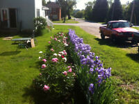 Bartending/Catering/Gardening/Cleaning