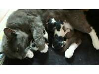 Mum and 3 kittens