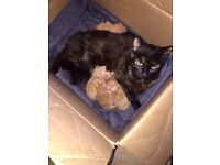 Taking deposits on ginger kittens