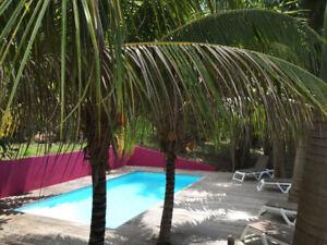 Location Bungalow de charme classé 4**** en Guadeloupe