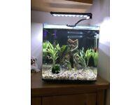 Aqua One Aqua Aspire 55 fish tank