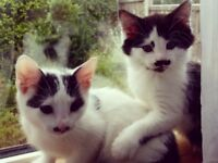 Beautiful kittens needed a forever home
