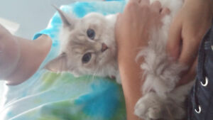 2 cats in need of a home