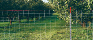 Deer and Orchard Fence