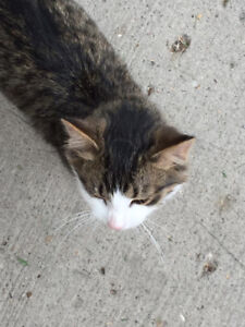 Found cat in General Hospital area