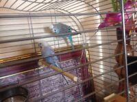 2 beauty full buggi with bird case.