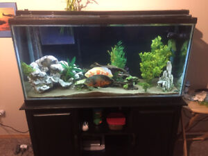 75 Gallon fish tank and 5 fish