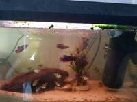Fish tank for sale with all